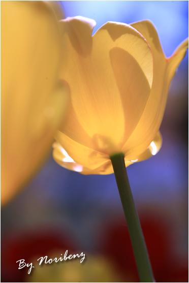 2011_04_18_1766_edited1