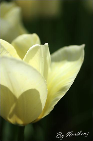 2012_04_15_9885_edited1
